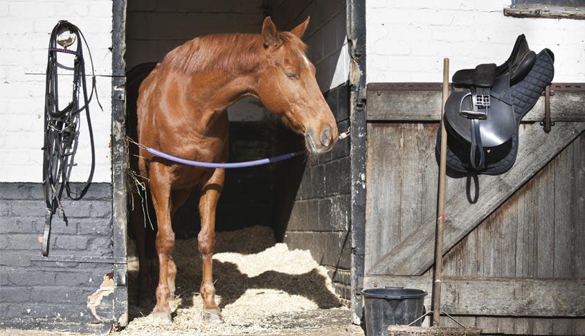litiere_chevaux1