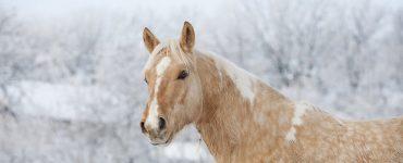 cheval-hiver