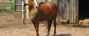 cheval et fourrage