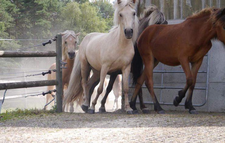 Lieu de passage de chevaux - Crédit : Ecoraster