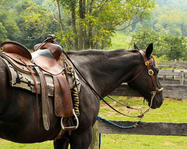 Cheval avec une selle de western