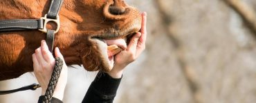 main et cheval