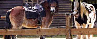chevaux sellés