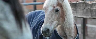 cheval à la retraite