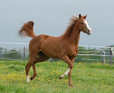 cheval clôture