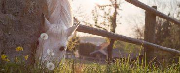 cheval mange