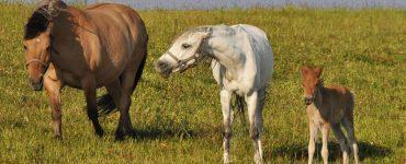 chevaux agressivité