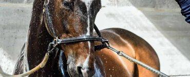 douche cheval