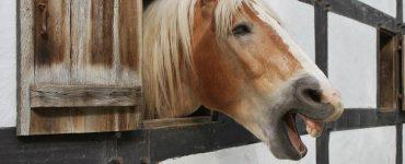 le hennissement du cheval