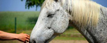 masser cheval