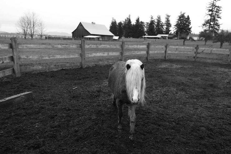Poney au paddock
