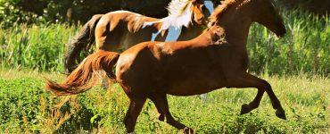 jambes chevaux