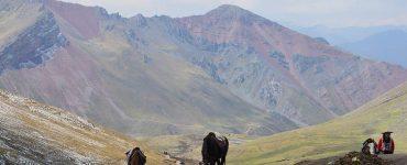 le paso péruvien au pérou