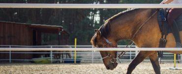 savoir s'arrêter à cheval
