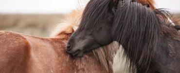 toilette chevaux