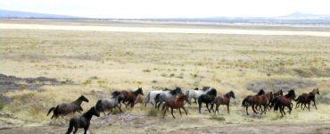 Mustangs en liberté Utah @JaimeJackson
