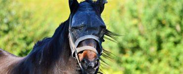 cheval protégé des insectes