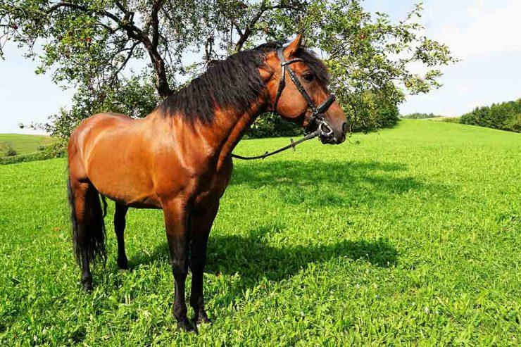 cheval en vacances