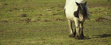 Cheval seul dans une prairie