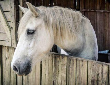 éduquer un cheval