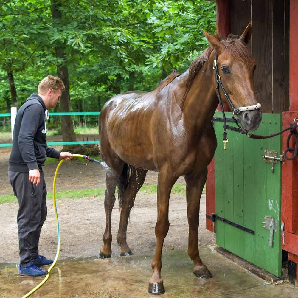 Passer de l'eau sur les pattes du cheval