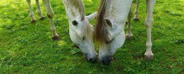 jambes et chevaux