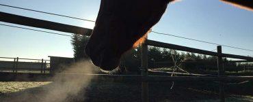 Rhume du cheval