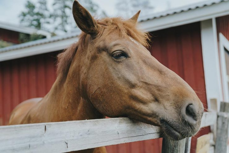 poils cheval