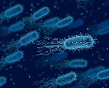 Les bactéries sont des micro-organismes