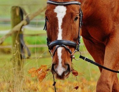 Un cheval mange des feuilles