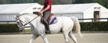 Homme sur cheval au pas