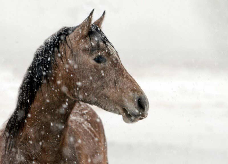 Cheval sous la neige