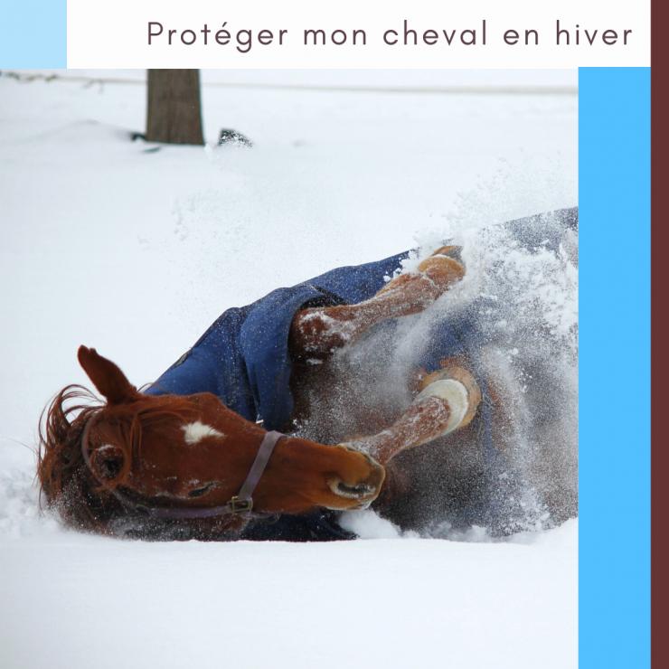 equinoo litière chevaux copeaux granulés bois box