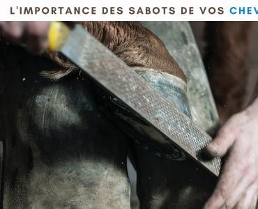 equinoo ecoodry ecodry litière copeaux cheval