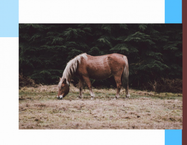 Embonpoint-cheval-litière-équitation