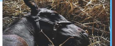 litière-cheval-économique-efficace
