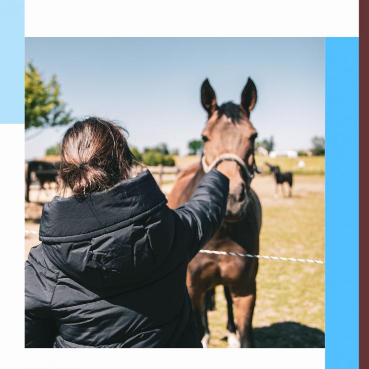 Cheval, salmonelle, bactérie, vétérinaire, équitation
