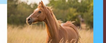Mutilation, chevaux, pré, nuit, peur
