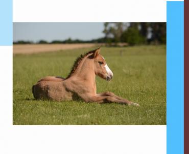 Poulain, cheval, croissance
