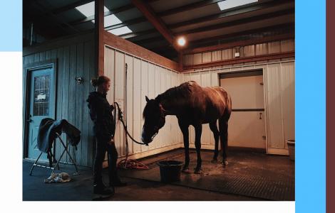 Astuces, équitation, chevaux