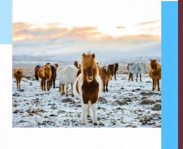 Le cheval en hiver, Equitation