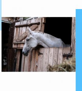 Aménagement, box, cheval, équipement, chevaux