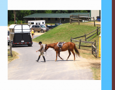 Asséchant, litière, chevaux, box, vans, hygiène