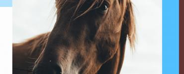 ethologie équine cheval éducation positive equinoo litière chevaux litière dépoussiérée cheval dalles box (1)